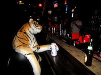 Tiger's Big Night Out